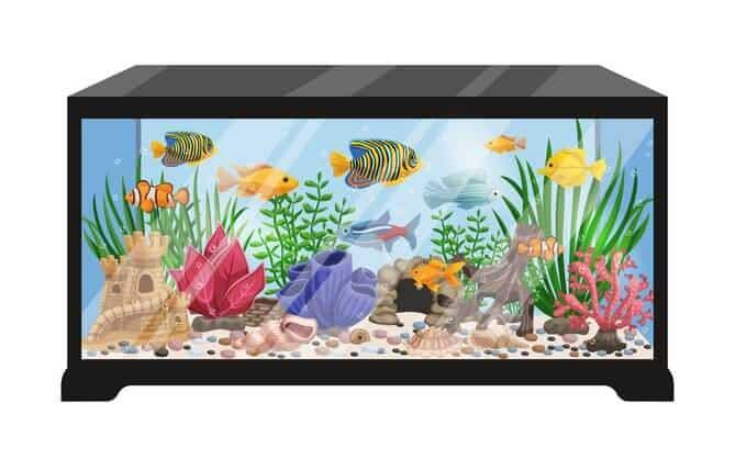Home Aquarium tank cartoon illustration