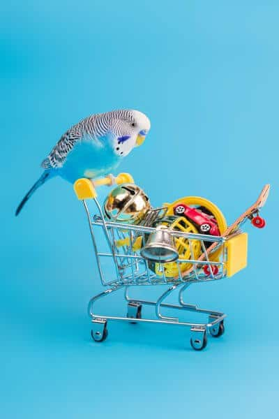 Blue wavy parrot on mini shopping