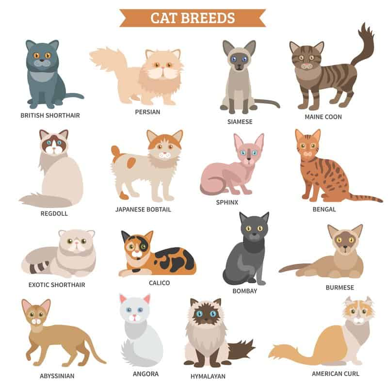 Cat breed set with names illustration