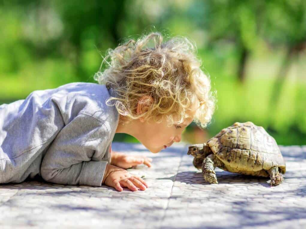 Child Sitting Next To A Pet Turtle Pet Reptiles