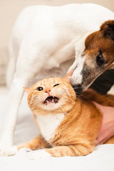 Cute dog playing with cat friend