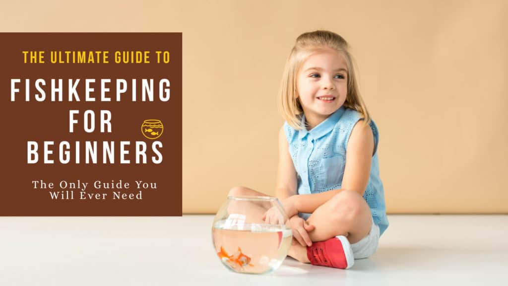 Cute girl sitting next to an aquarium with gold fish, text on image- The ultimate guide to fish-keeping for beginners