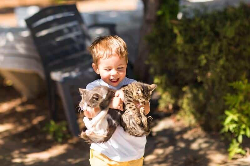 Cute lovely boy with kitten in a park