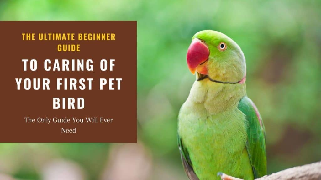 Green parrot on tree close up photo with text: The ultimate guide to caring of your first pet bird