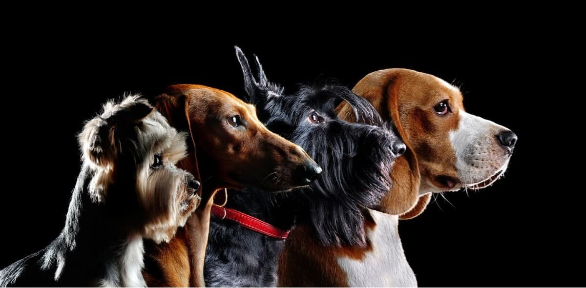 Group silhouette of dogs of different breeds