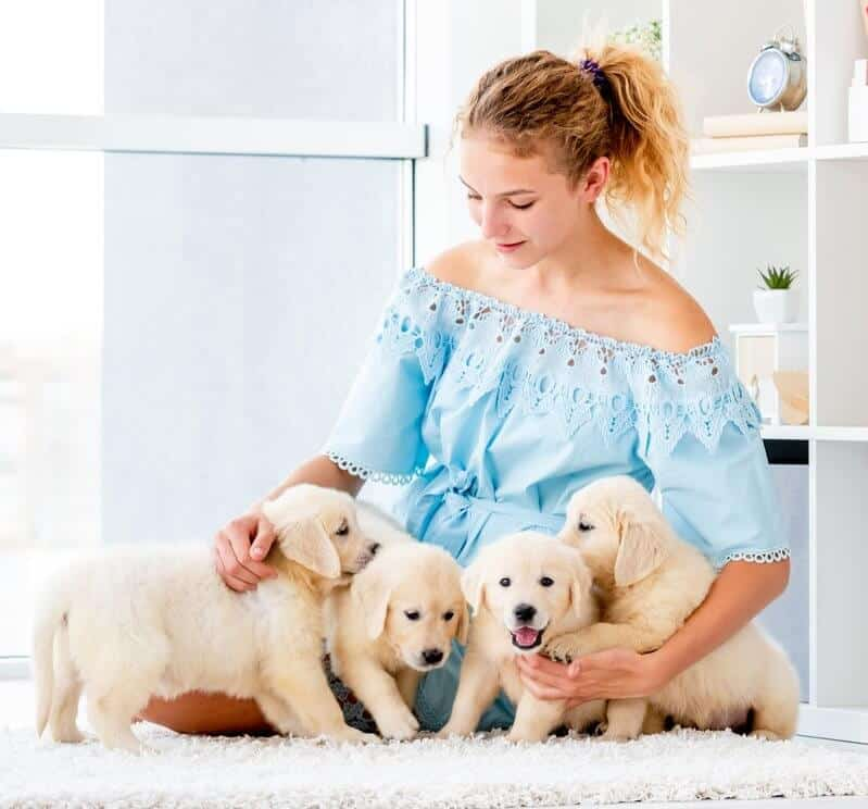 Nice girl hugging retriever puppies hugging