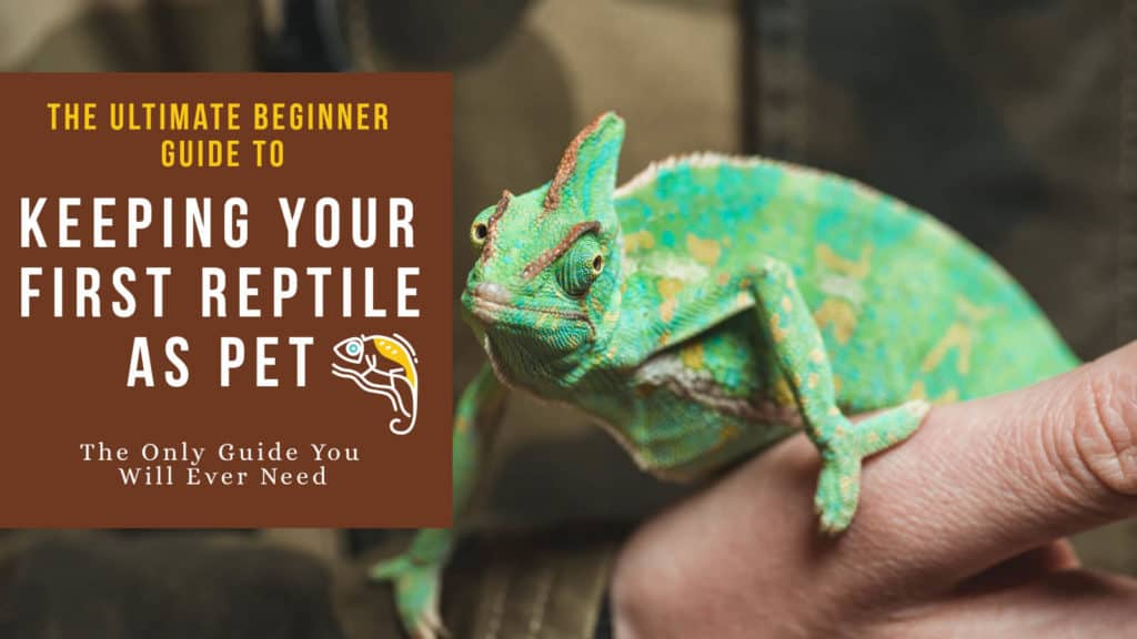 Reptile Pets Beginner Guide: A Complete Overview