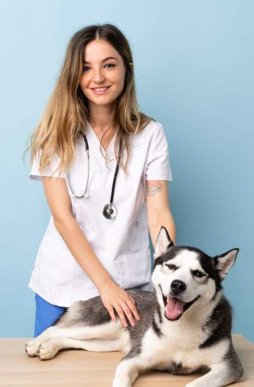 Veterinary doctor at vet clinic with Siberian husky dog