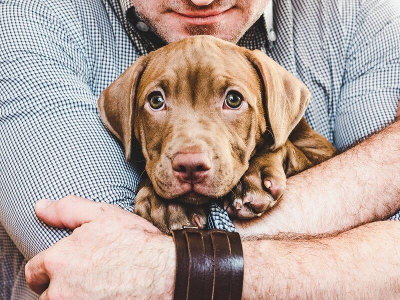 Man hugging a young, charming puppy.