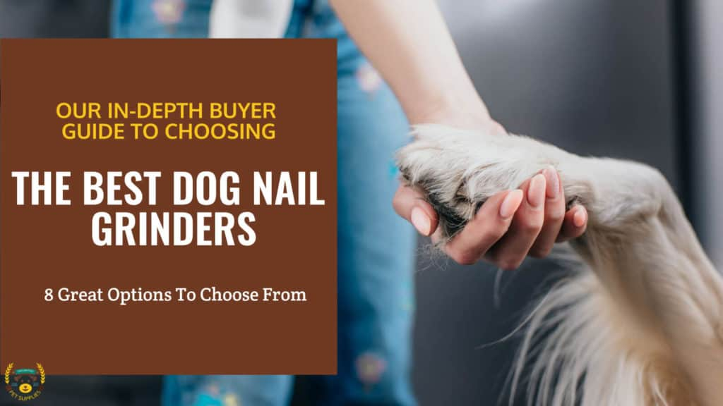 close-up photo of woman holding dog paw with the text- THE BEST DOG NAIL GRINDERS