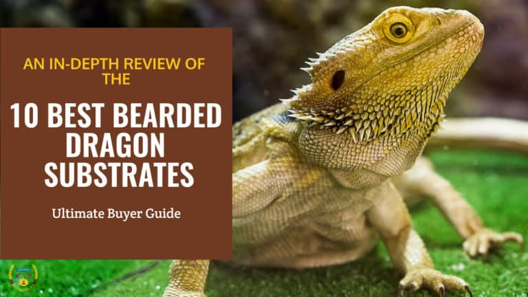 BEST BEARDED DRAGON SUBSTRATES