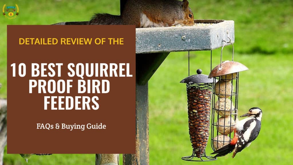 Detailed Review Of The 10 Best Squirrel Proof Bird Feeders That Actually Work