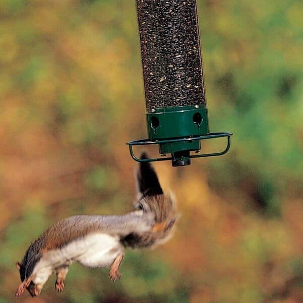 Droll Yankees Squirrel Proof Feeder 1