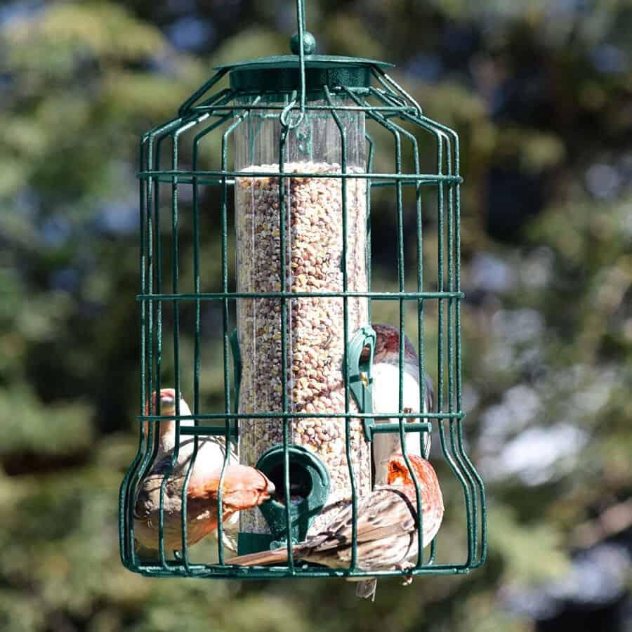 Gray Bunny Caged Tube Anti Squirrel Bird Feeder 3