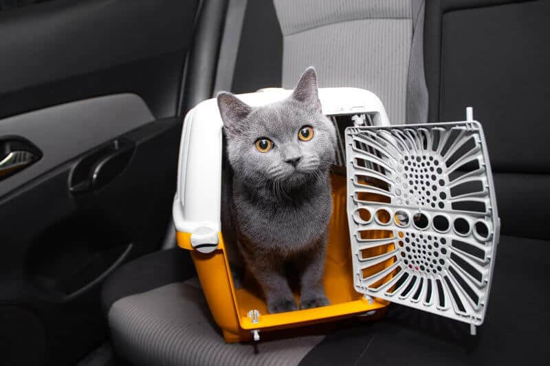 Pet carrier in the car on the seat . safe transportation of pets