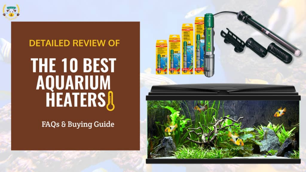 THE 10 BEST AQUARIUM HEATERS