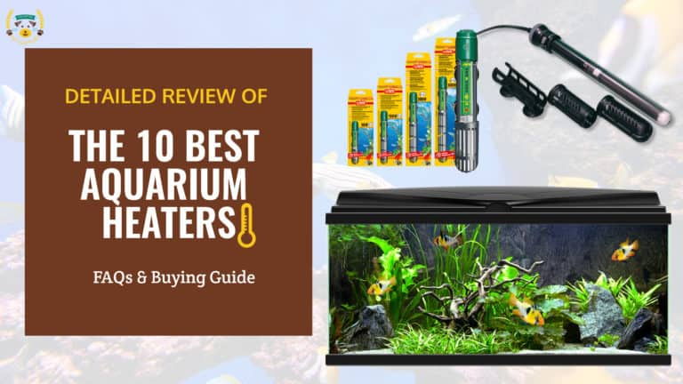 THE 10 BEST AQUARIUM HEATERS