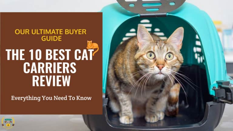 THE 10 BEST CAT CARRIERS REVIEW