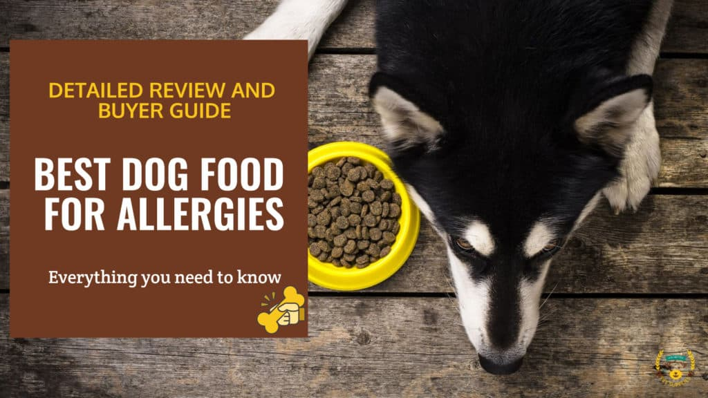 Sick dog next to dog food bowl with the text: Best dog food for allergies
