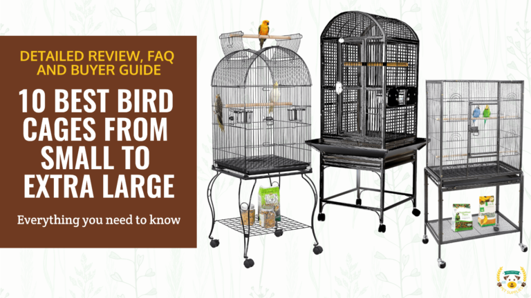 10 Best Bird Cages From Small To Extra Large