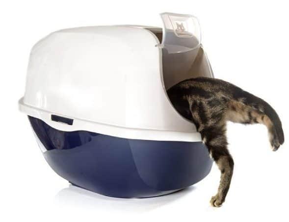 Cat entering closed cat litter box