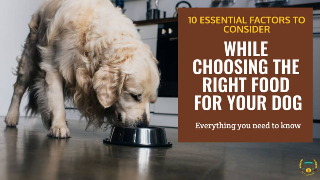 10 Things to Consider While Choosing Dog Food