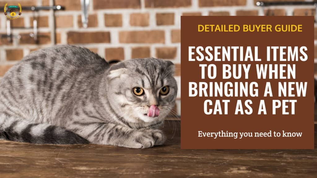 Essential Items To Buy When Bringing A New Cat As A Pet