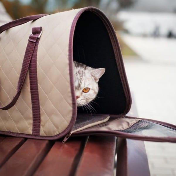 Little cute cat in a pet carrier