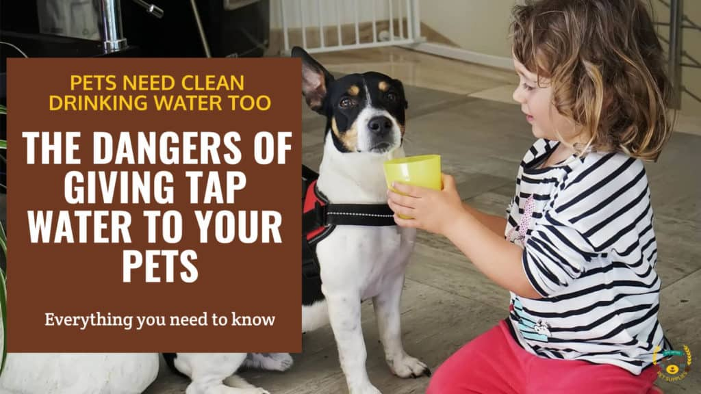 The Dangers of Giving Tap Water to Your Pets