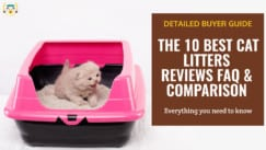 British kitten learns to use litter in a pink box With the text: The 10 Best Cat Litters For Multiple Cats