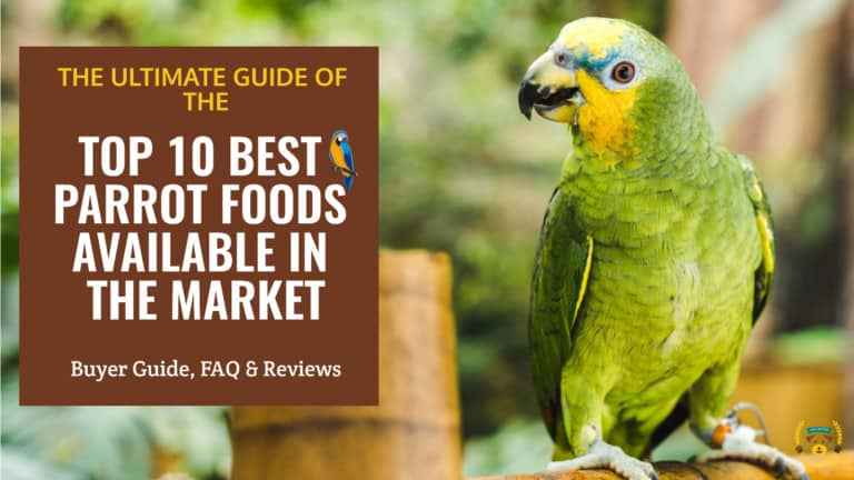 Green parakeet standing next to a cage with the text: top 10 best parrot foods available in the market