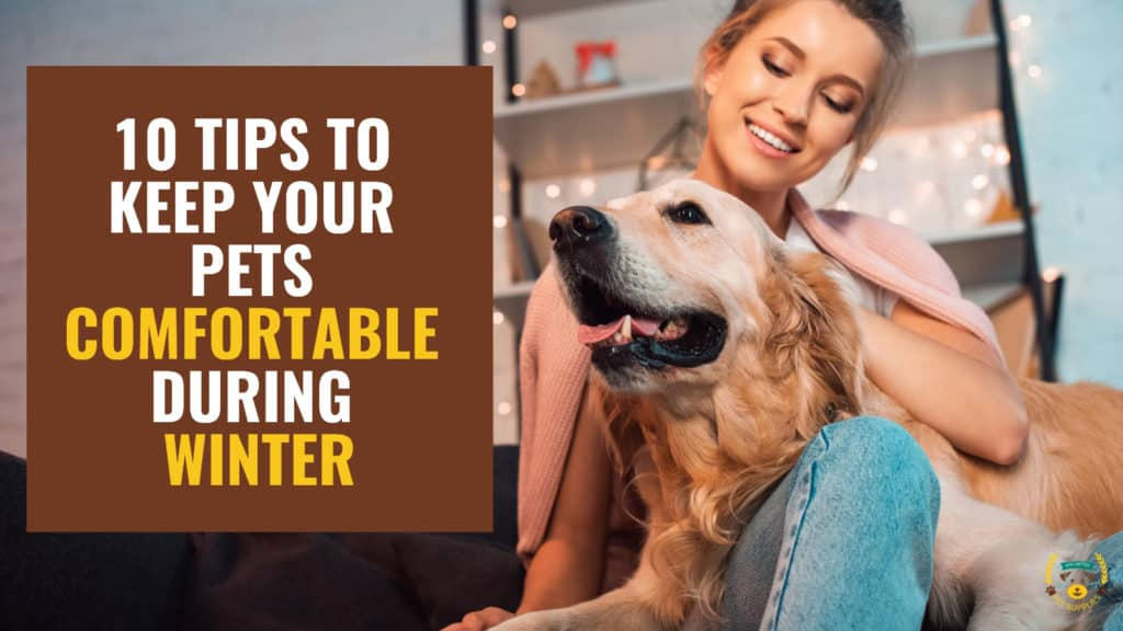 10 Tips to Keep Your Pets Comfortable During Winter