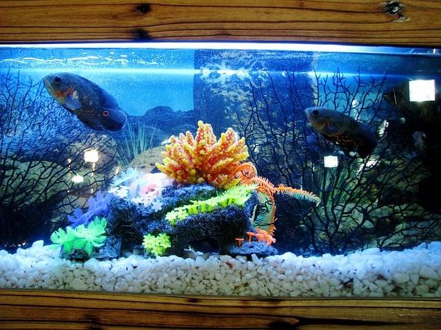 Best aquarium heater