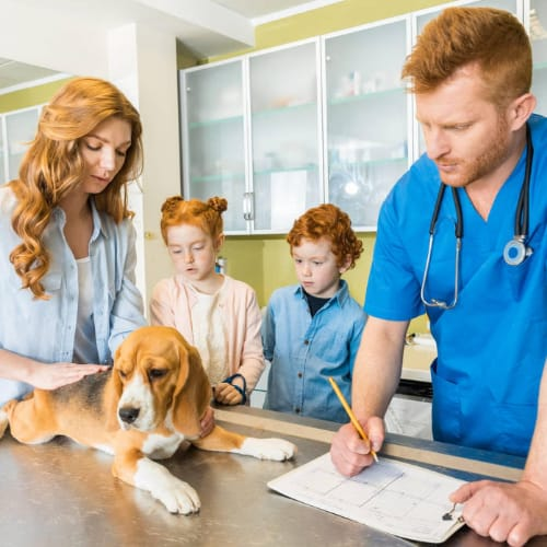 Veterinary Doctor Checking Dog