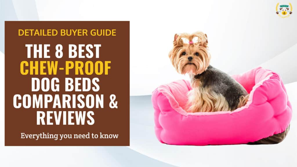 8 Best Chew-Proof, Indestructible Dog Beds Reviews & Guide