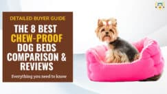 Best Chew-Proof Indestructible Dog Beds