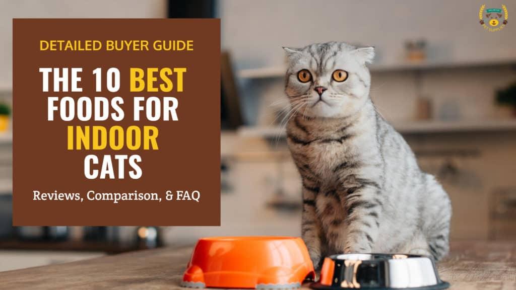 The 10 Best Cat Foods For Indoor Cats