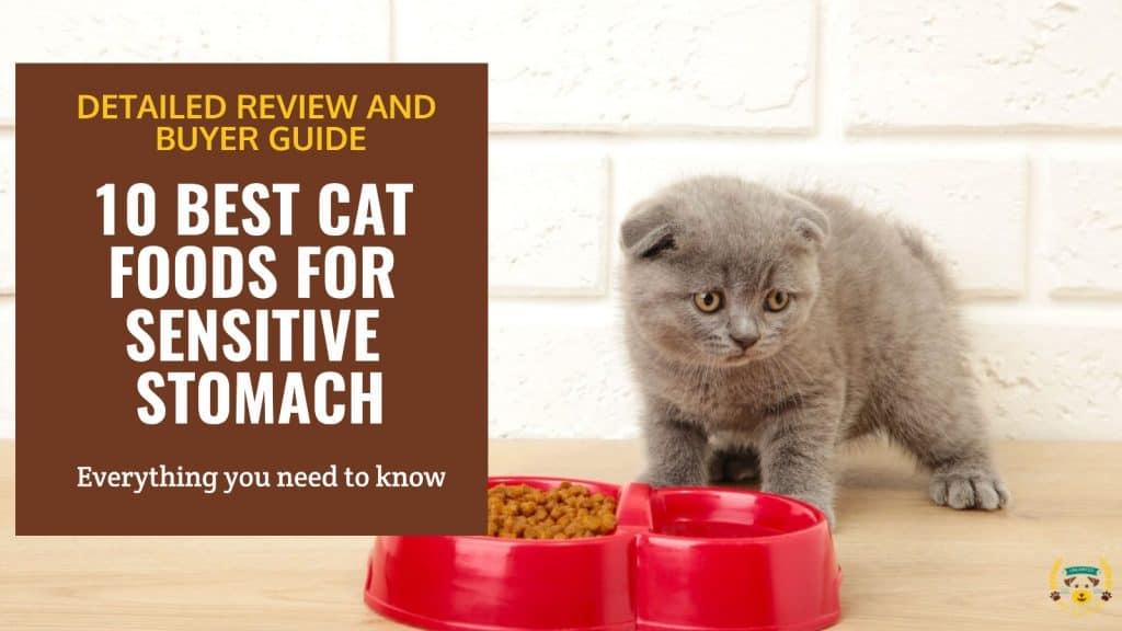 10 Best Cat Foods For Sensitive Stomach Comparison, Guide & Reviews