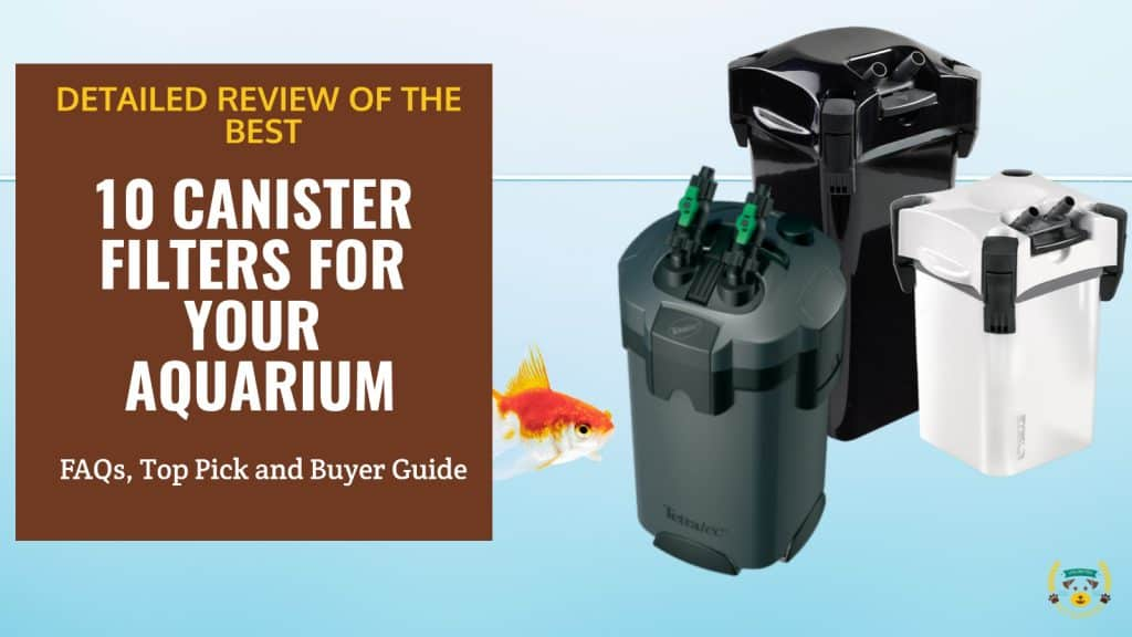 What is The Best Canister Filter For Your Aquarium? 10 Best Picks Reviewed