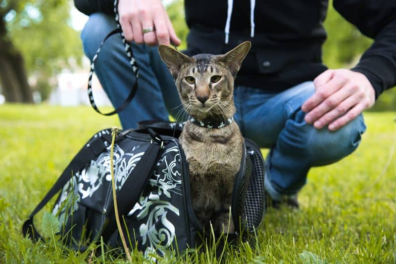 cat comes out of the carrying case