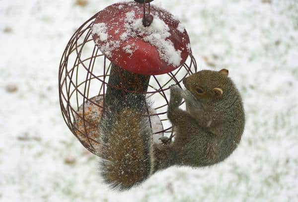 best squirrel proof bird feeder