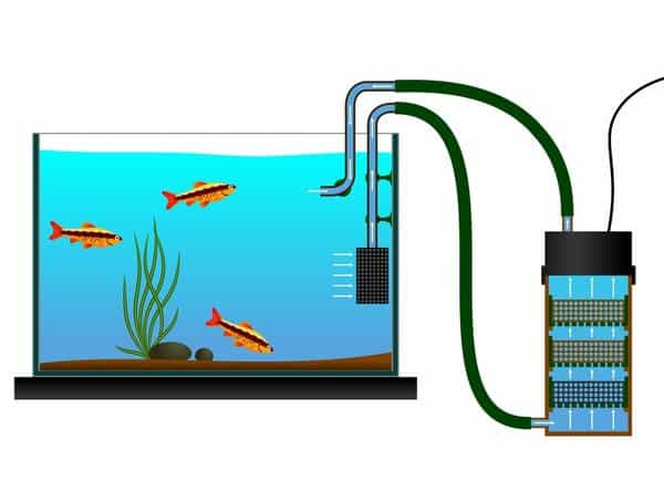 How the best canister filter for aquariums work