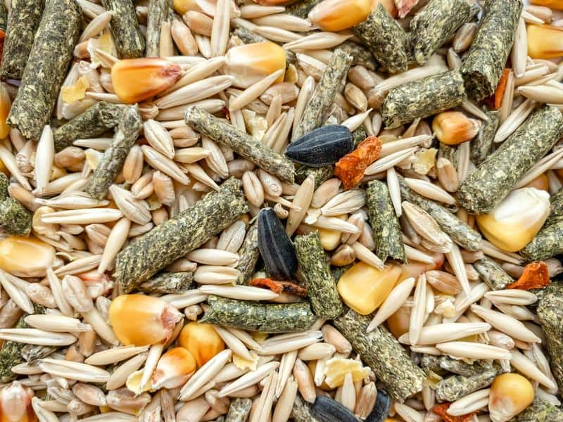 Best Parrot Foods: pellets and seeds