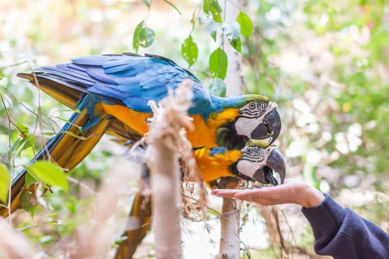 Parrot in the zoo eating seeds