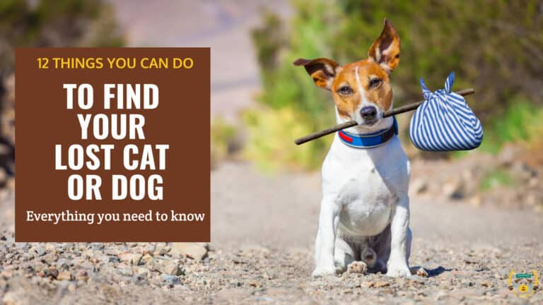 what to do if you have lost your pet