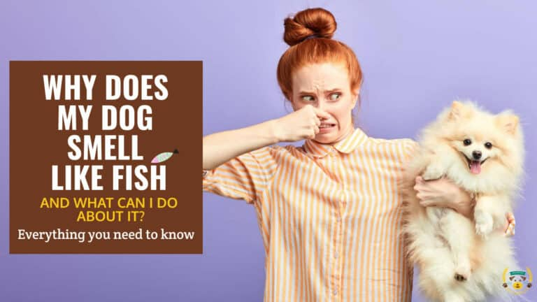 Why Does My Dog Smell Like Fish